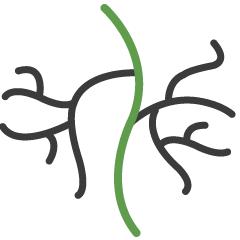 MemorialCare Icon Vascular